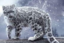 felins en voie de disparition/ endangered cats