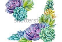succulents www