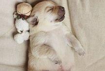 Bichinhos   Pets :3