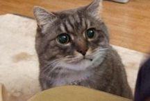 Meow Meow / Cats
