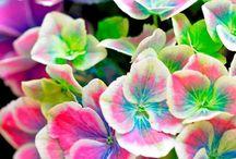 La beauté du monde / La perfection est de ce monde, à nous de la percevoir et de la magnifier