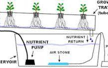aeroponics&hydroponics