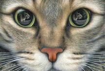 sa gatto