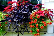 Window Boxes / by Blythe