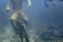 Diving / Follow this board for Scuba diving, deep sea diving, snorkeling, anything underwater!