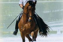 Exercises Rider Improvement