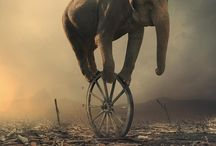 fil / elephant