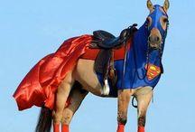 Kostüm Pferde