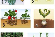Biologie voortplanting planten