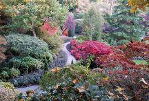 Garden / by Brenda Geckler