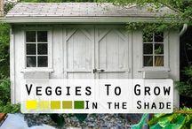 Veggies / Growing