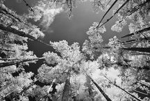 Infrared photography / by Patrice Cochran