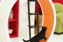 Cat Agility / For energetic, adventurous, and curious cats...