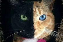 felinos (felines) / meus animais preferidos. adoro a personalidade. acho muito inteligentes. um pouco parecido com os humanos.