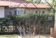 cat fences and other stuff