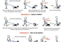 American bulldog tips
