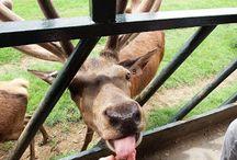 Animal Farms/Zoos