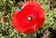 agroturystyka Polne Kwiaty