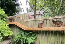 Cat Runs Enclosure