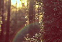 Amazing woods