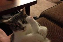 Meow / These cats make me giggle!  / by Susan Mae