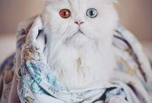 Cat Yoda