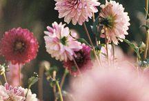 Nature et Fleurs / Paysages, nature, fleurs...