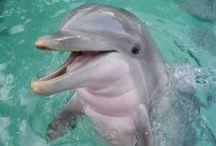 Süßer  Delfin!!!! / Süßes Ding