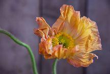 Flowers & Bloemen / Bloemen