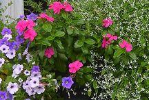 gardening/yard