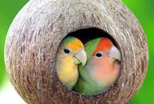 Lovebird Nests