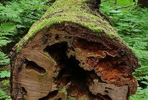 Stumps/fallen