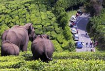 Kochi to Kovalam via Munnar: 8 days tour / This 8 days tour starts from the Kochi and end in Thiruvananthapuram by visiting Munnar, Periyar, Kumarakom, Alappuzha & Kovalam beach. Kanyakumari (Lands end of India) day tour is also there with this tour.  Details: http://www.gointoalltheworld.in/travelkerala.aspx?id=166