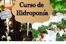 hidroponico