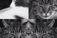 Mis Gatos - My Cats - Meus Gatos - Miei Gatti - Mes Chats / ZAPHIRO RADIANTE - FEDERICO FELLINI - LOLO PARKER