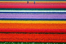 Netherlands / by fwakata