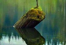 Natur / Foton från världens alla hörn