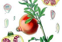 ilustracje roślin