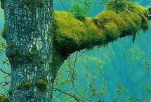 forest / by Jigen 1