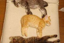 Cat-a-rations
