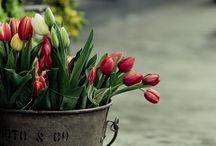 spring / by Ellie Orbanek