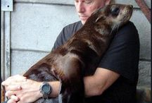 Love is love. Rescued Seal. Cape Fur Seal,