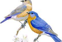 На белом фоне(птицы)