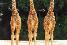 Giraffilicious