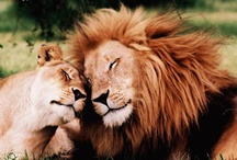 Lion Love, etc. / by Chrissie Marie