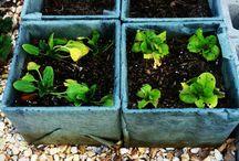 A garden to grow / by Courtney Alicia