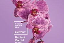 Design by Color - Perfect Shades of Purple / 2014 Color of the Year is Radiant Orchid! See how you can incorporate this color into your Home Entertainment space! #coloroftheyear #radiantorchid