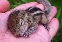 Squirrels♥