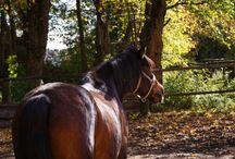 my lovely horses / about all my lovely horses : Mirko, Goody, Daisy and Nani