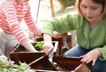Gardening / by Susan Murphy